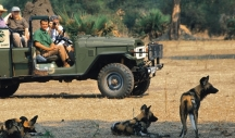 chiawa-wild-dogs-2